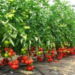 9719 Акробат для рослин інструкція із застосування
