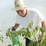 9822 Бордоська рідина для обробки рослин інструкція та відгуки