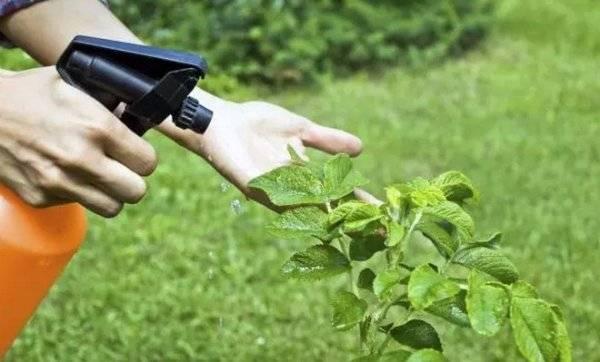 Брунька (фунгіцид) – інструкція із застосування, відгуки дачників