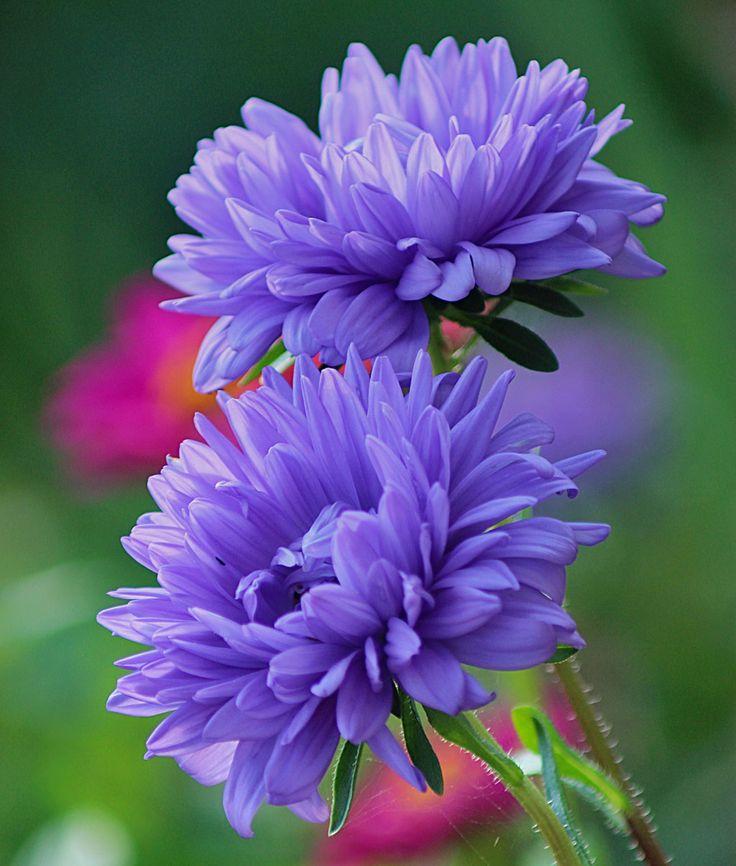 Які квіти можна сіяти під зиму. Як і коли проводити посів