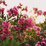 10022 Використання чагарникових рослин в плануванні саду
