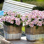 10032 Альстромерія: опис, посадка і догляд за квіткою