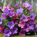 10093 Ранні весняні квіти: сімейства і види
