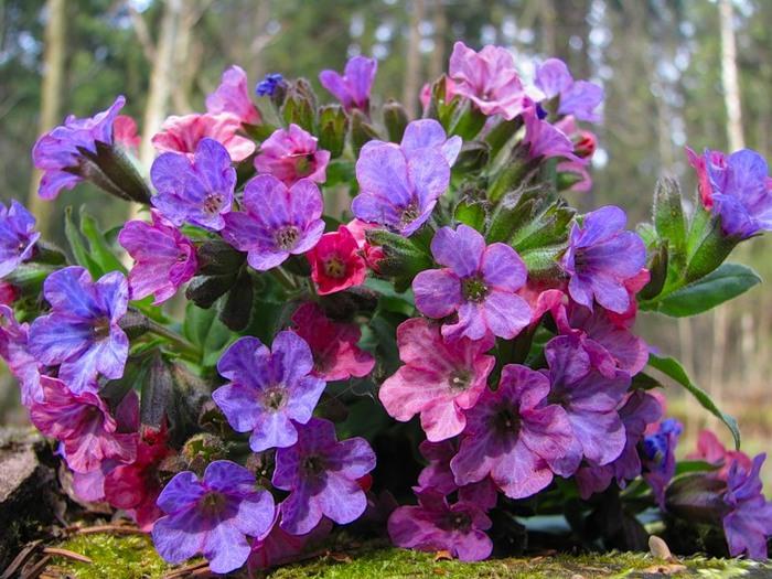 Ранні весняні квіти: сімейства і види