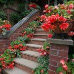 10122 Види бегонії з червоними, зеленими і рожевим листям