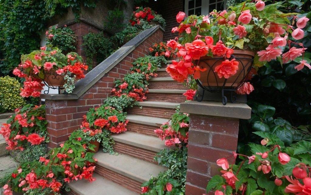 Види бегонії з червоними, зеленими і рожевим листям