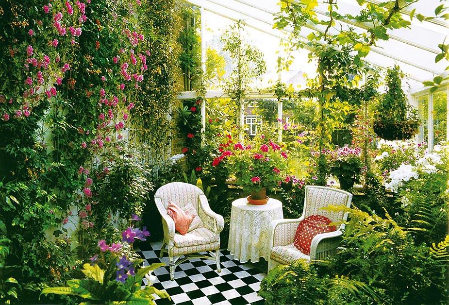 Утримання і догляд за кімнатними квітами