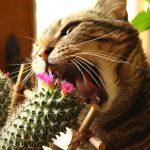 10209 Різновиди небезпечних і корисних кімнатних рослин