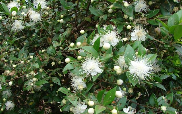 Саджанці декоративних рослин і насіння – що простіше виростити