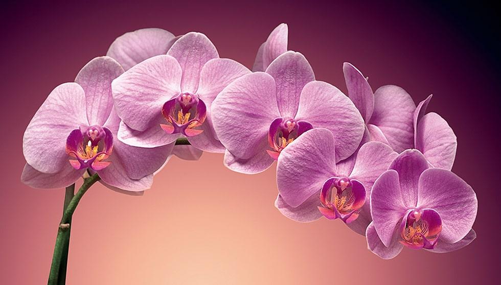 10678 Факти про різні види орхідей