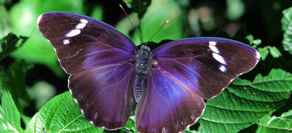 10655 Факти про садових метелики