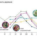 10499 Фітонциди в саду: мисливці за мікробами