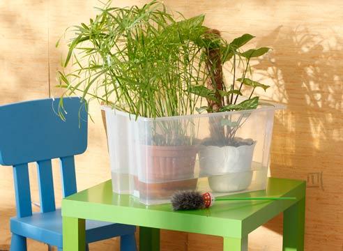 10493 Полив кімнатних рослин під час відпустки – прості рішення
