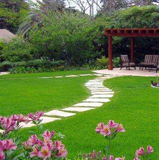 10509 Вибір правильного типу трави для вашого двору