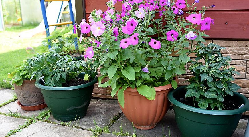 10703 Заливає сад і город: як врятувати урожай?