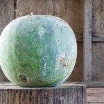10797 Бенинказа - восковая сладкая тыква, которая хранится 3 года!