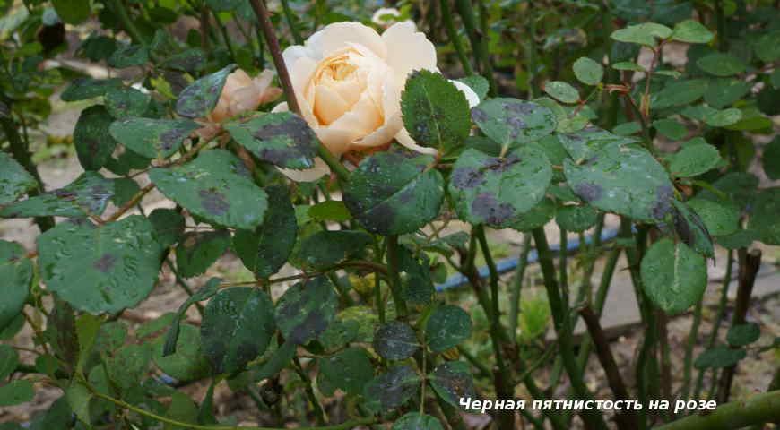 10928 Болезни и вредители многолетних растений