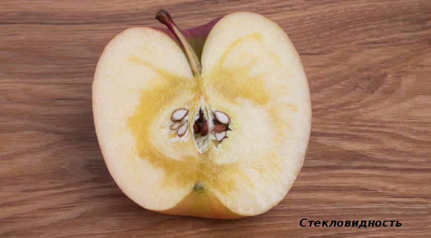10893 Диагноз по урожаю яблок: что случилось с яблоками?