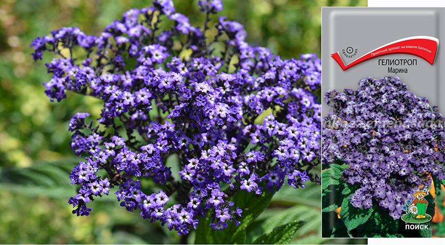10887 Именной сад: сорта цветочных и садовых культур с именем Марина