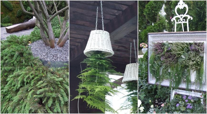 10917 Необычные способы посадки обычных растений или как удивить соседей по даче