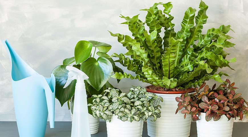 11005 5 комнатных растений с плохой энергетикой