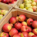 10954 5 лучших способов хранения яблок на зиму