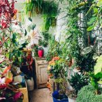 11010 6 комнатных растений, которые приносят удачу