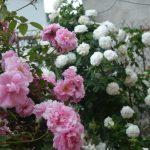 10982 Именной сад: здесь можно подобрать сорта растений со своим именем и именем своих любимых