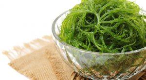 11024 Морская капуста или ламинария: полезные свойства, противопоказания и вкусные рецепты