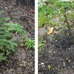 11082 Чем укрыть теплолюбивые растения на зиму?