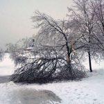 11057 Ледяной дождь: насколько он опасен для растений?
