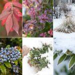 11073 Сад, красивый круглый год: мифы и реальность