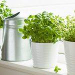 11132 Самые подходящие растения для кухни