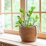11193 Ядовитые комнатные растения, опасные для детей и животных