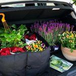 11287 Какие хитрости помогут правильно покупать растения и готовую рассаду в садовом центре и питомниках