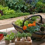 11276 Какие цветы нельзя сажать в огороде