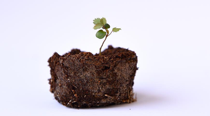 11258 Торфяные таблетки: все секреты и преимущества выращивания рассады овощей и цветов в торфяных таблетках