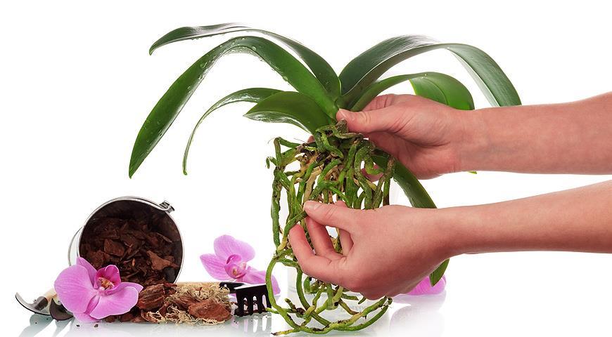 11279 Янтарная кислота: секреты применения в саду, в огороде и дома