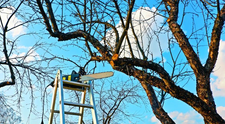 11289 Зимняя и весенняя обрезка плодовых деревьев: советы опытных садовников и подробное видео обрезки