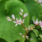 11359 10 почвопокровных теневых растений, которые можно посадить под деревьями и кустарниками вместо газона