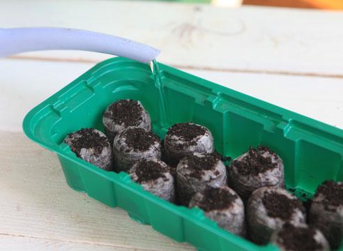 11297 Майстер-клас по посіву насіння на розсаду петунії в торф'яні таблетки