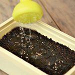 11319 Выращивание рассады лобелии: мастер-класс с пошаговыми фото