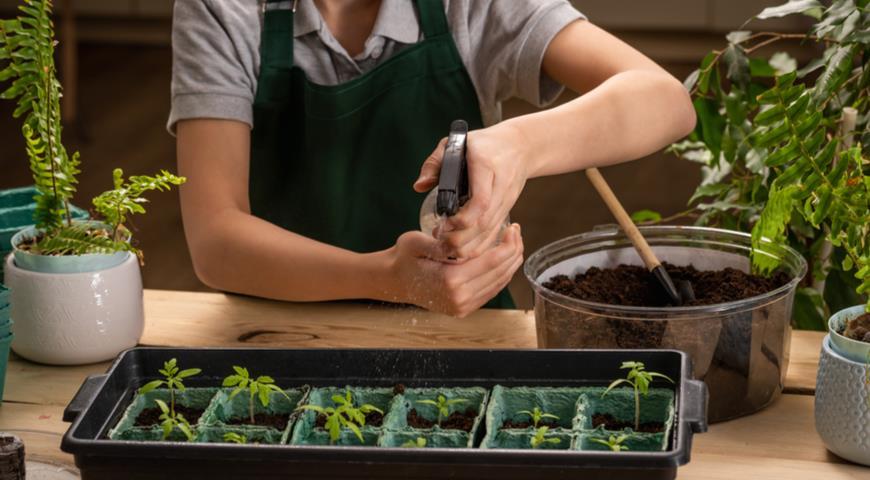 11429 Как правильно подкармливать рассаду томатов