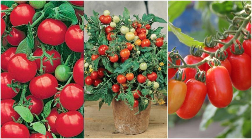11451 Овощи на балконе: подходящие сорта и секреты урожая томатов, баклажанов, перцев и т.д. в контейнерах