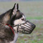 11388 В регионах ввели новые штрафы за прогулку с собакой
