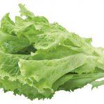 11418 Все разнообразие листовых салатов: учимся разбираться в салате