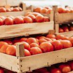 11552 Как сохранить урожай томатов, перцев, баклажанов, огурцов и дынь до самого Нового года