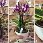 11669 Как правильно поливать орхидеи: советы Елены Костровой, коллекционера редких растений