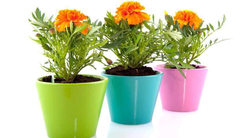 11654 Лучшие дачные растения, которые можно выкопать и выращивать зимой дома