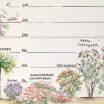 11600 Осенний уход за розами: укрытие, обработка и обрезка